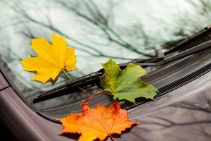 fall car care special